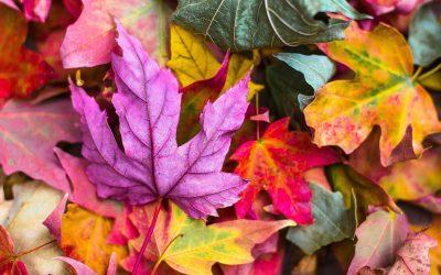 autumn newsletter